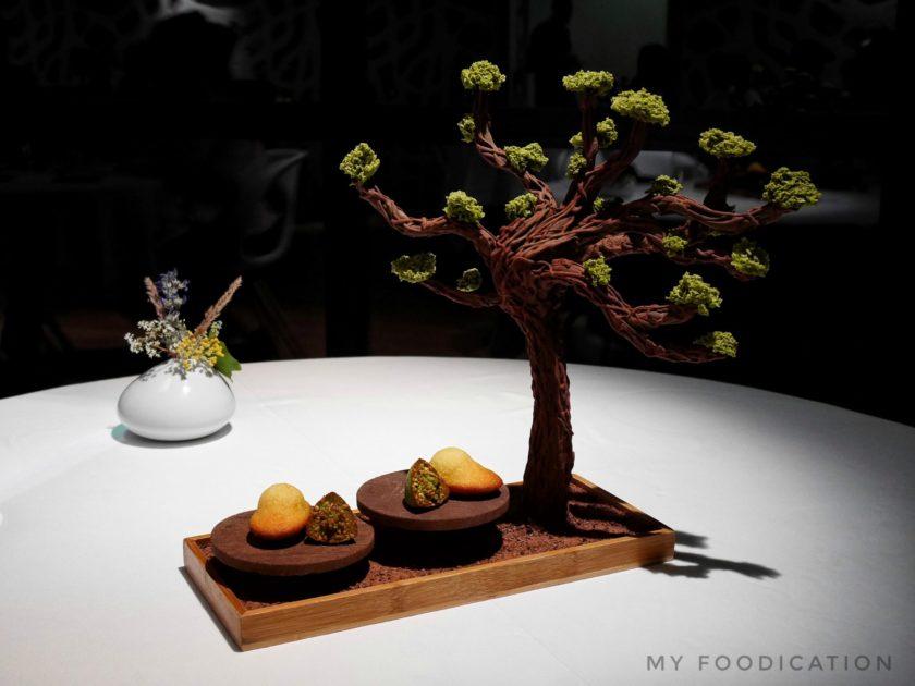 Origines-arbre chocolat