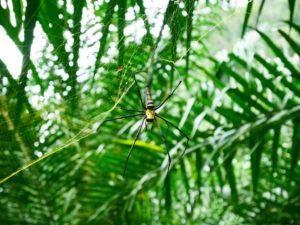 Thaïlande-Khao Sok-araignée