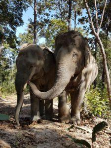 Thaïlande-éléphants