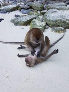 Thaïlande-Koh Phi Phi-Monkey beach