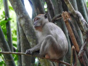 Thaïlande-Khao Sok-Macaque