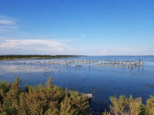 Les étangs et les huîtres